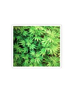 Vinyl Sticker - Marijuana Bird's Eye View